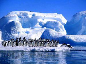 antartika penguenler