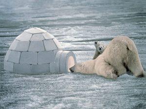 antartika kutup ayısı